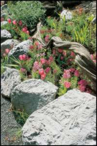Natural lightweight pumice landscaping stone. Photo courtesy of Featherock, Inc.