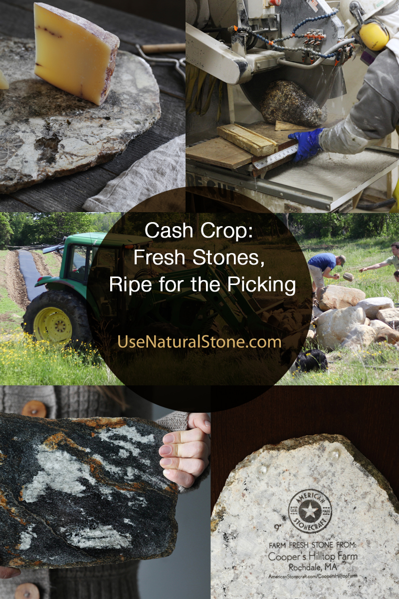 Cash Crop: Fresh Stones, Ripe for the Picking