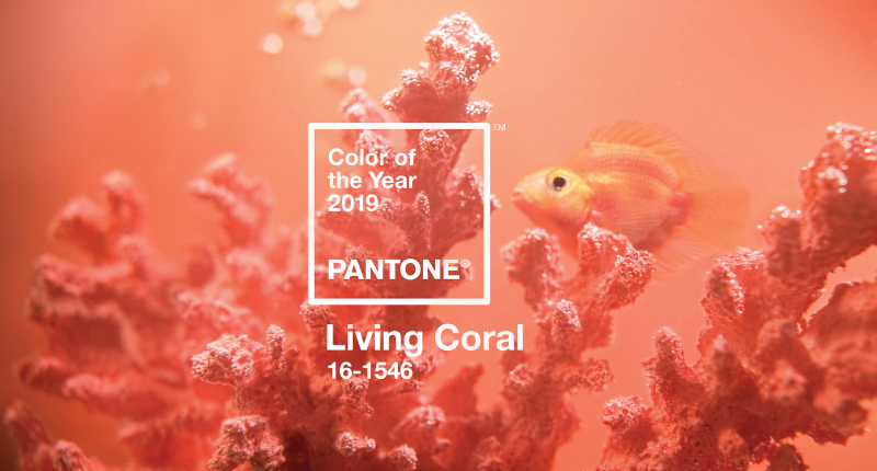 2019 Colors of the Year Channel Warmth, Renewal, and Soul